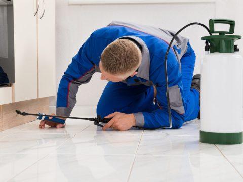 CureAll Regular Pest Inspections