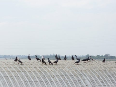 Commercial Grade Bird Deterrents for Industrial Sites