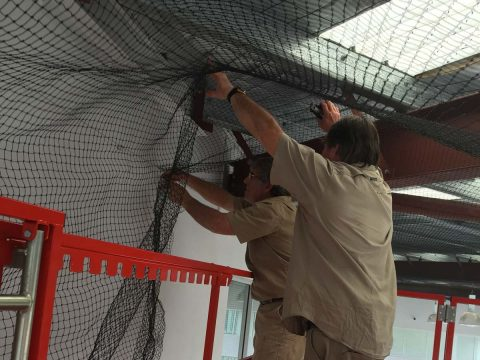 Cure All Pest Control – Warehouse Bird Proofing: Netting, Spikes, Removal & Shock Systems