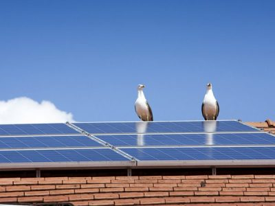 Bird Proofing Solar Panels: Less poop means more power