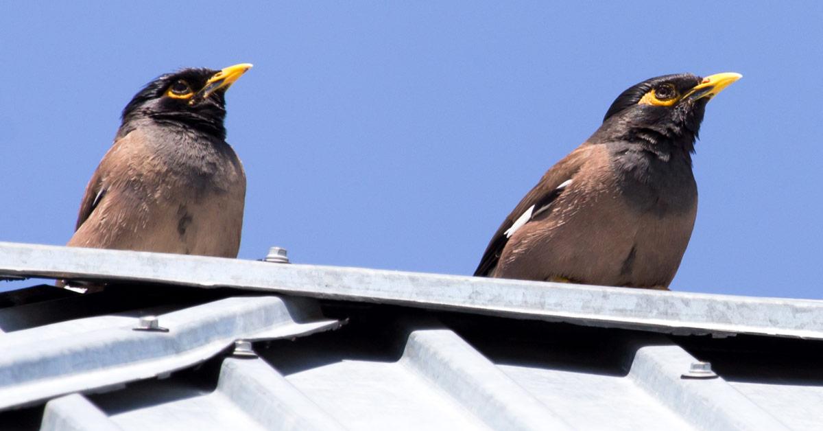 Bird spikes vs. Bird Netting vs. Bird Shock Deterrents