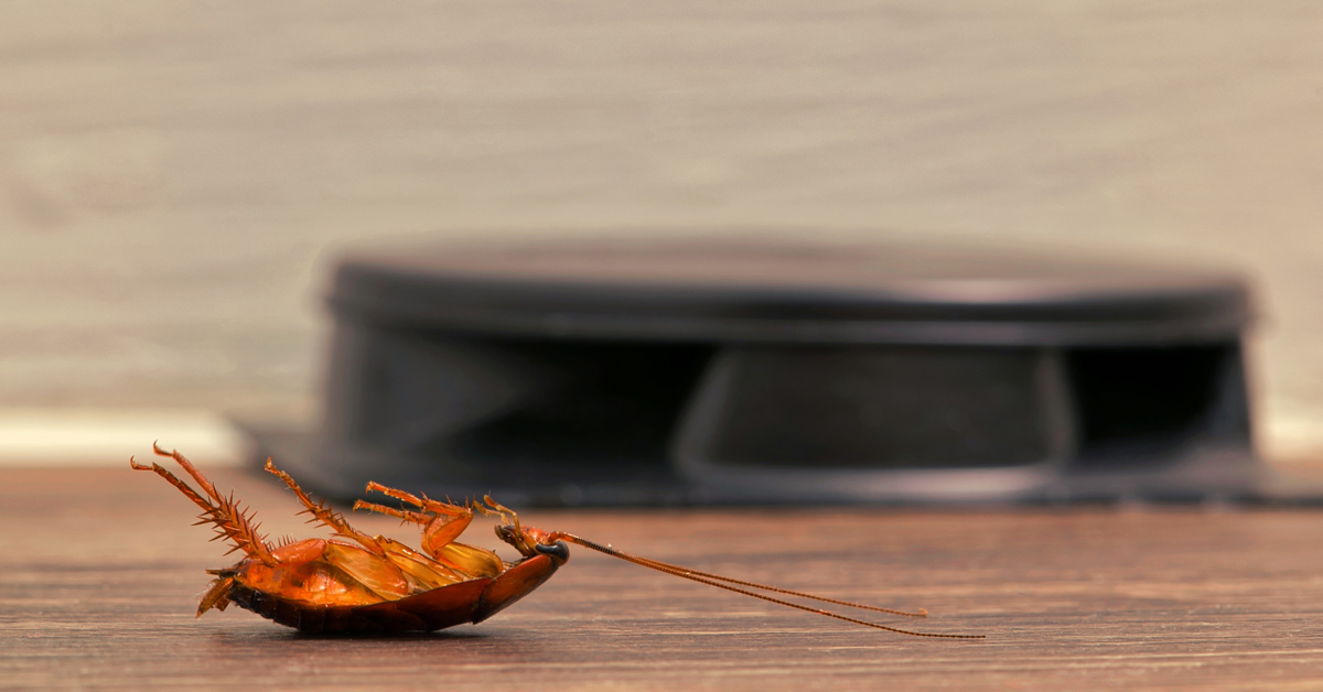 Get rid of cockroaches for good with Cure All Pest Control. Brisbane pest control services can exterminate cockroaches swiftly and thoroughly.