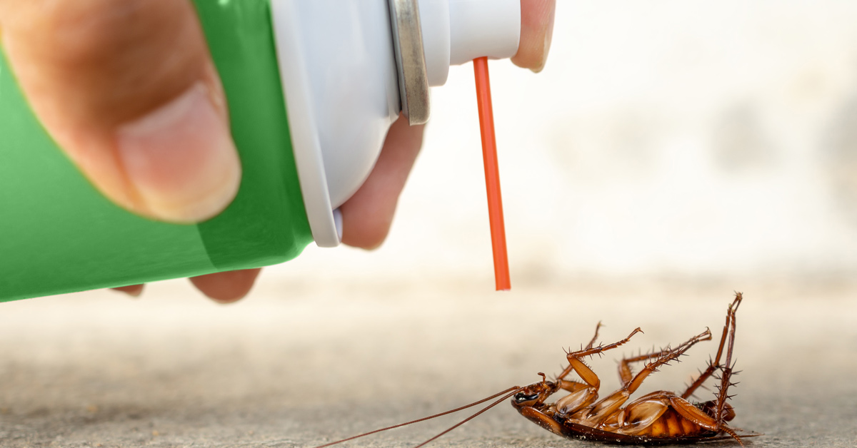 The methods of cockroach control | Cure All Pest Control