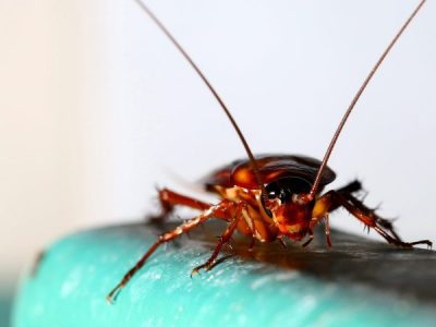 The methods of cockroach control