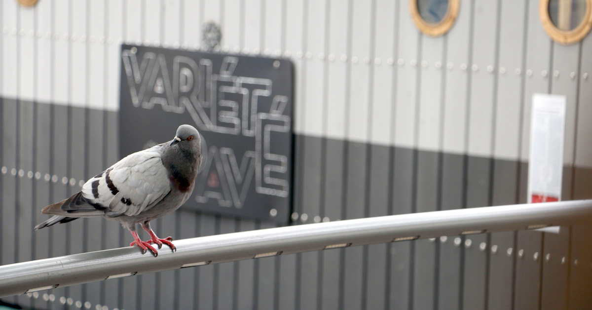 Stop pigeons damaging your property and causing a risk to your health with bird control by Cure All Pest Control.