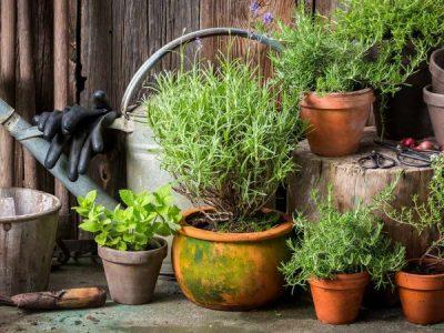 Best indoor plants for pest control