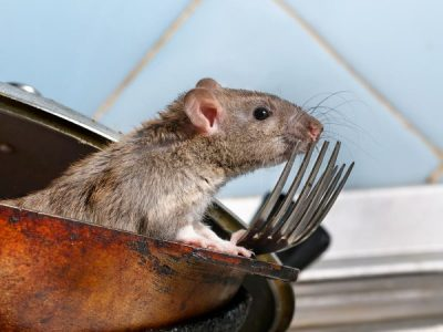 Don't let Rodents ruin your Restaurant