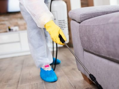 When is the Right Time to Call a Pest Control Expert?