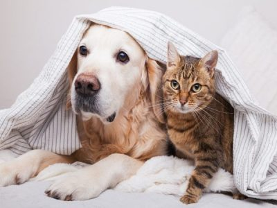 What Type Of Pests Do Your Pets Bring Into The House?