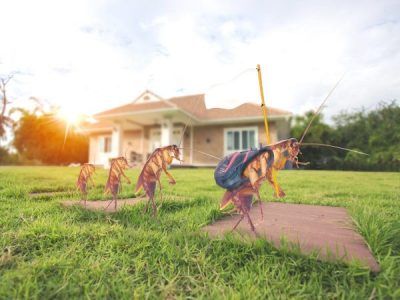 When is the best time to do pest control in Queensland?