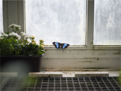 Does The Change In Weather Attract Pests To Your Home?